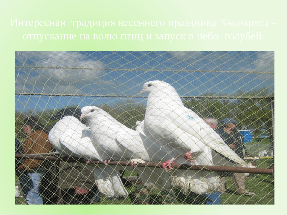 Интересная традиция весеннего праздника Хыдырлез –отпускание на волю птиц и...