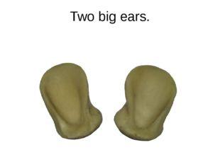 Two big ears.