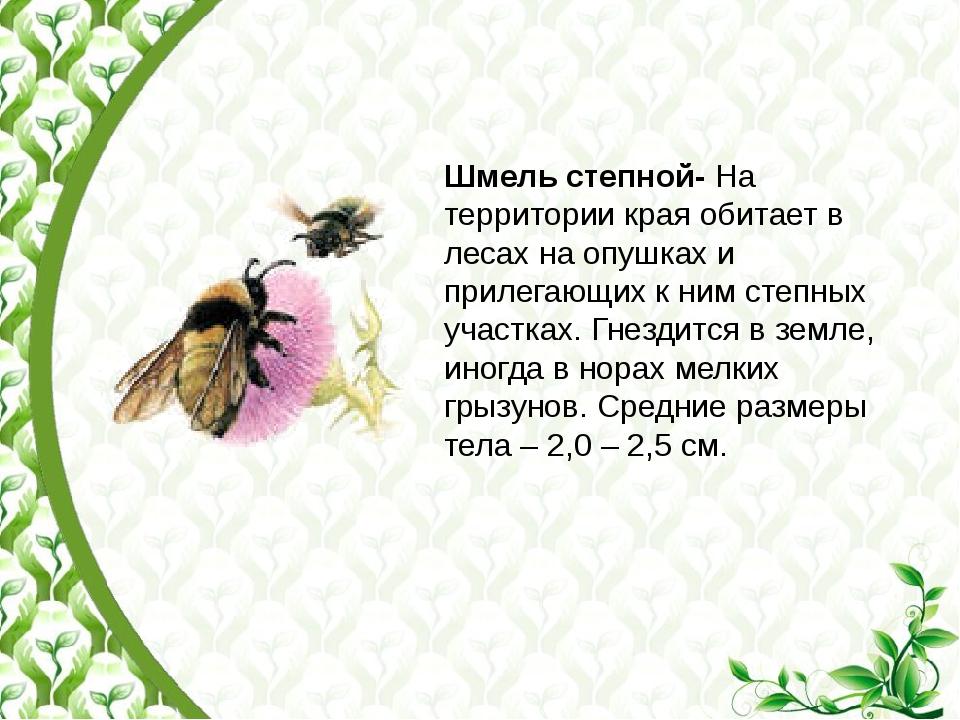 Шмель степной- На территории края обитает в лесах на опушках и прилегающих к...