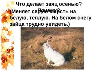 Что делает заяц осенью? Почему? (Меняет серую шерсть на белую, тёплую. На бел
