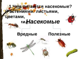 1.Чем питаются насекомые? (Растениями: листьями, цветами, корнями.) Насекомые