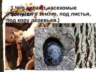 1.Что делают насекомые осенью? (Прячутся в землю, под листья, под кору деревь