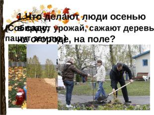 1.Что делают люди осенью в саду, на огороде, на поле? (Собирают урожай, сажаю