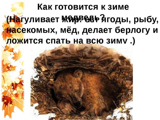 Как готовится к зиме медведь? (Нагуливает жир: ест ягоды, рыбу, насекомых, мё...