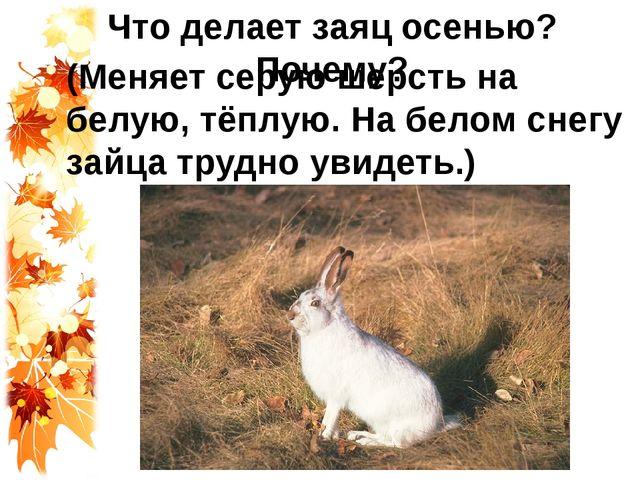 Что делает заяц осенью? Почему? (Меняет серую шерсть на белую, тёплую. На бел...