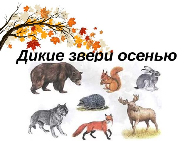 Дикие звери осенью