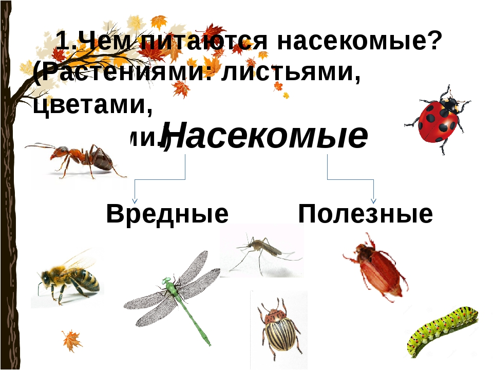 1.Чем питаются насекомые? (Растениями: листьями, цветами, корнями.) Насекомые...