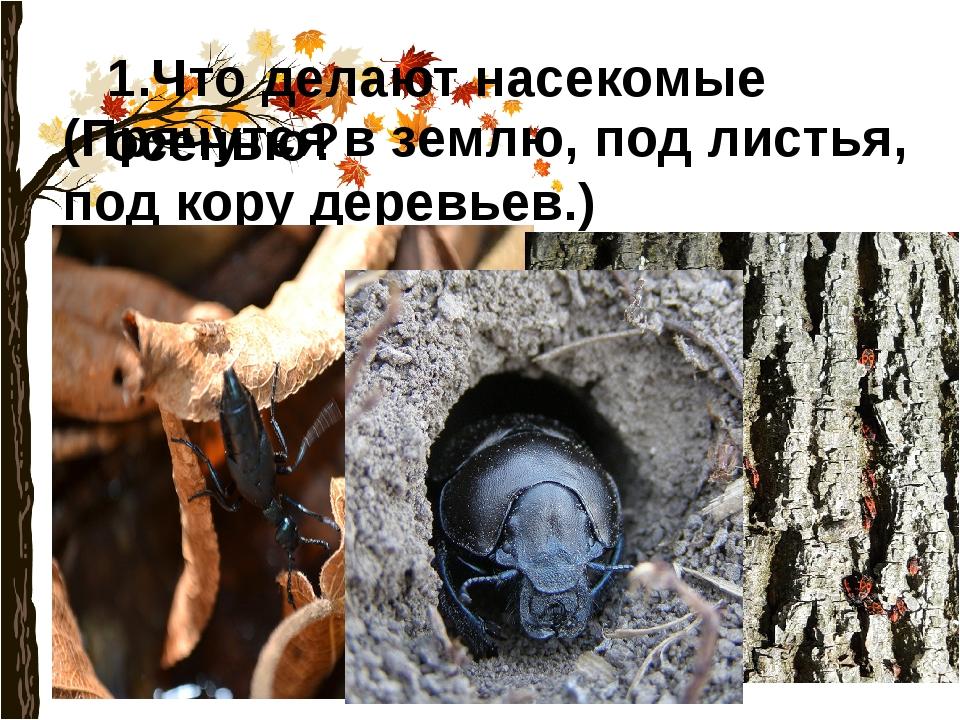 1.Что делают насекомые осенью? (Прячутся в землю, под листья, под кору деревь...