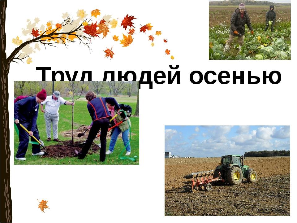Труд людей осенью