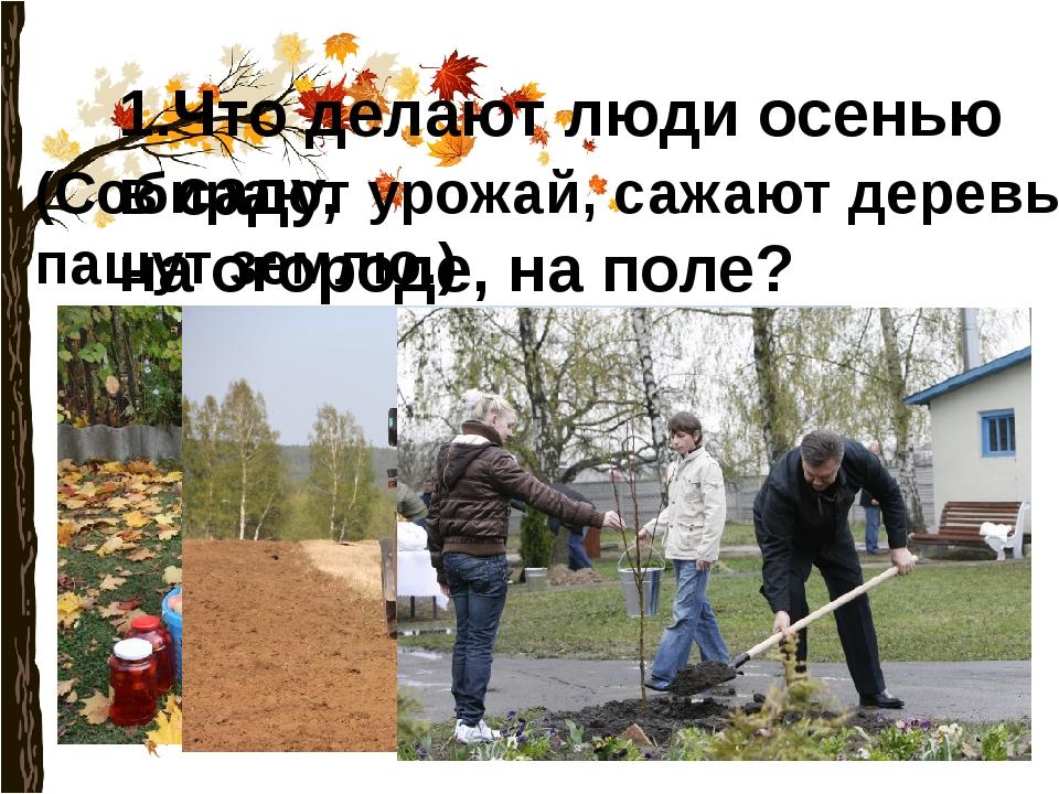 1.Что делают люди осенью в саду, на огороде, на поле? (Собирают урожай, сажаю...