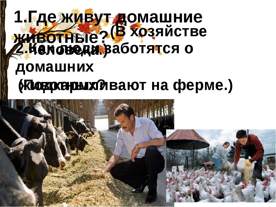 1.Где живут домашние животные? (В хозяйстве человека.) 2.Как люди заботятся о...