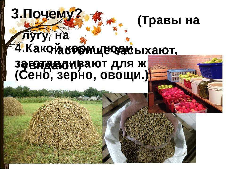 3.Почему? (Травы на лугу, на пастбище засыхают, увядают.) 4.Какой корм люди з...