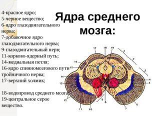 Ядра среднего мозга: 4-красное ядро; 5-черное вещество; 6-ядро глазодвигатель