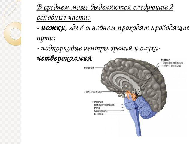 В среднем мозге выделяются следующие 2 основные части: - ножки, где в основно...