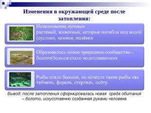 Изменения в окружающей среде после затопления: Вывод: после затопления сформи