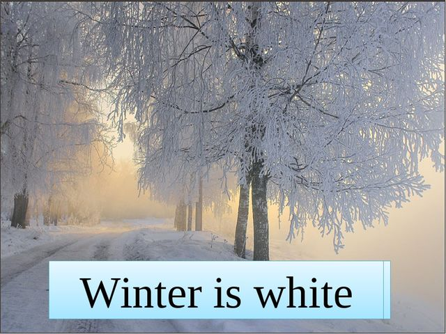 Winter is white Winter is white
