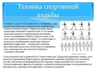 Техника спортивной ходьбы В момент, когда стопа одной ноги, отталкиваясь, еще