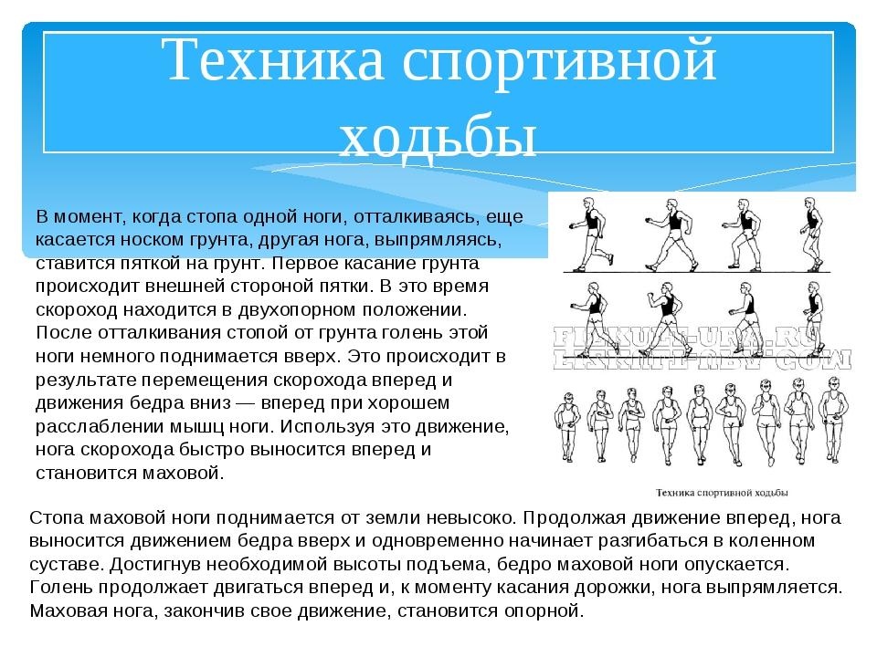 Техника спортивной ходьбы В момент, когда стопа одной ноги, отталкиваясь, еще...
