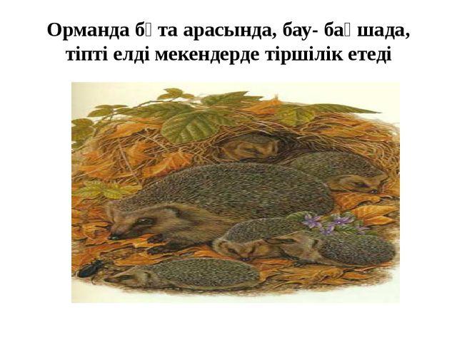 Орманда бұта арасында, бау- бақшада, тіпті елді мекендерде тіршілік етеді