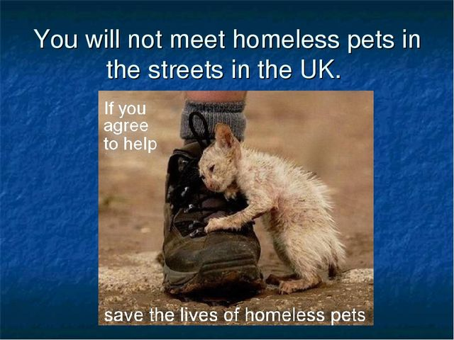 You will not meet homeless pets in the streets in the UK.