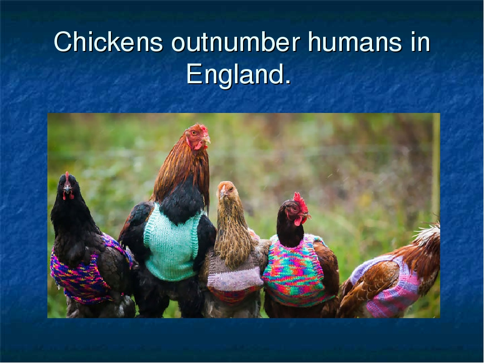 Chickens outnumber humans in England.
