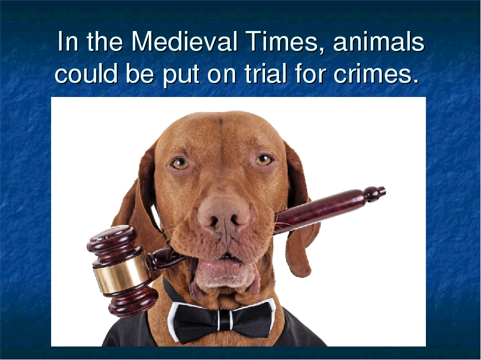 In the Medieval Times, animals could be put on trial for crimes.