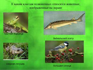 К каким классам позвоночных относятся животные, изображенные на экране прытк