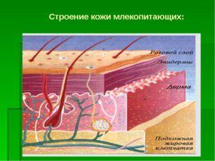 Строение кожи млекопитающих: Образовательный портал «Мой университет» - www.