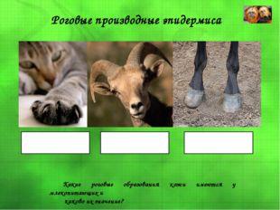 Роговые производные эпидермиса Когти Рога Копыта Какие роговые образования ко