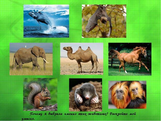 Почему я выбрала именно этих животных? Раскройте мой умысел.