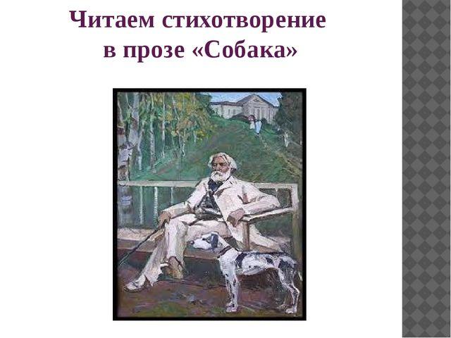 Читаем стихотворение в прозе «Собака»