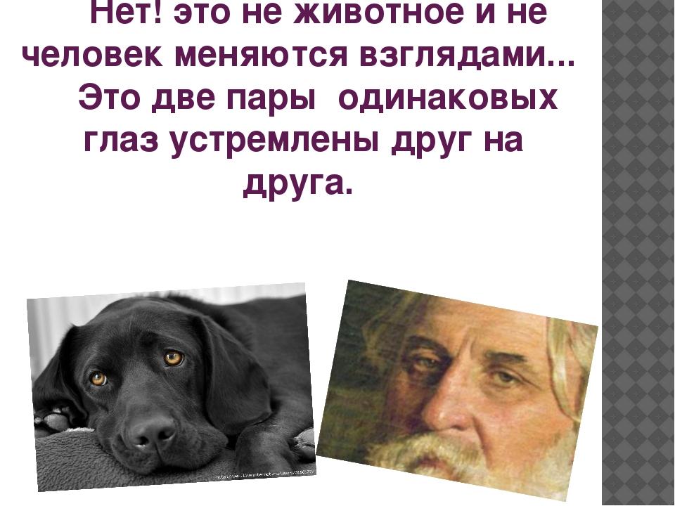 Нет! это не животное и не человек меняются взглядами... Это две пары о...