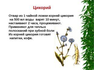 Цикорий Отвар из 1 чайной ложки корней цикория на 500 мл воды варят 10 минут