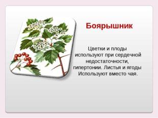 Боярышник Цветки и плоды используют при сердечной недостаточности, гипертонии