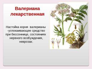 Валериана лекарственная Настойка корня валерианы -успокаивающее средство при