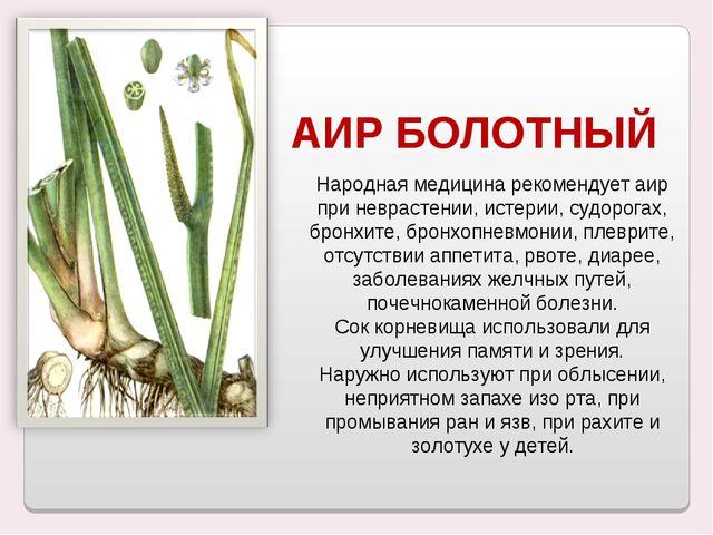 Народная медицина рекомендует аир при неврастении, истерии, судорогах, бронхи...