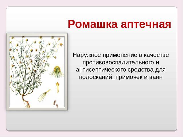 Ромашка аптечная Наружное применение в качестве противовоспалительного и анти...