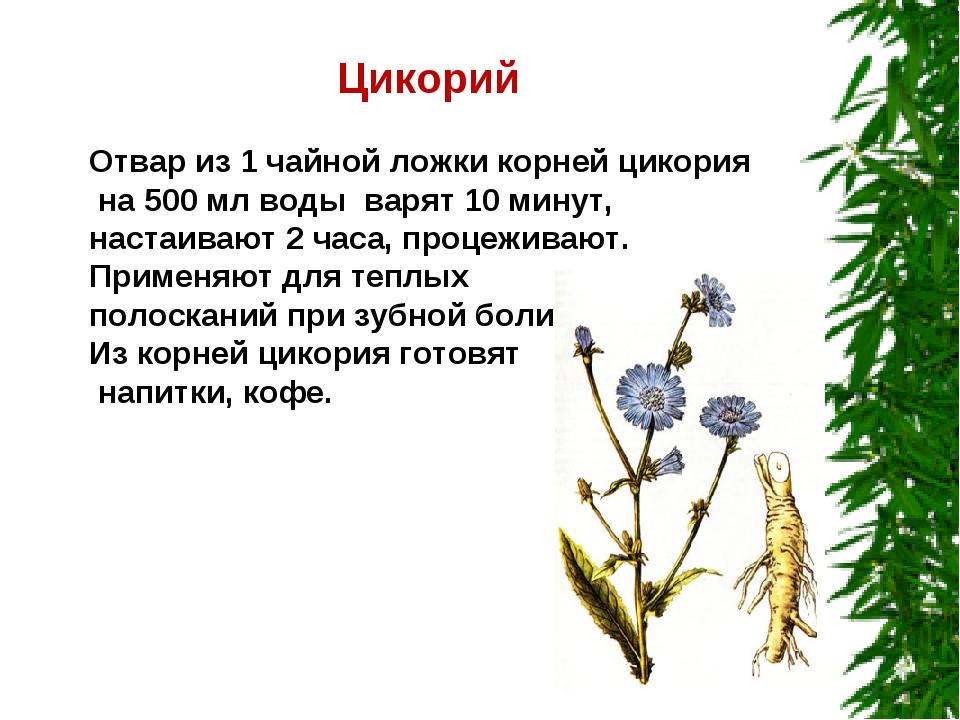 Цикорий Отвар из 1 чайной ложки корней цикория на 500 мл воды варят 10 минут...