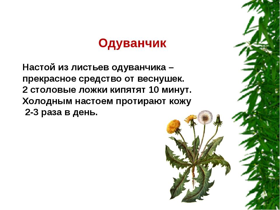 Одуванчик Настой из листьев одуванчика – прекрасное средство от веснушек. 2...