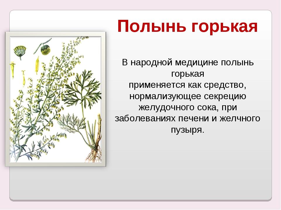 Полынь горькая В народной медицине полынь горькая применяется как средство, н...