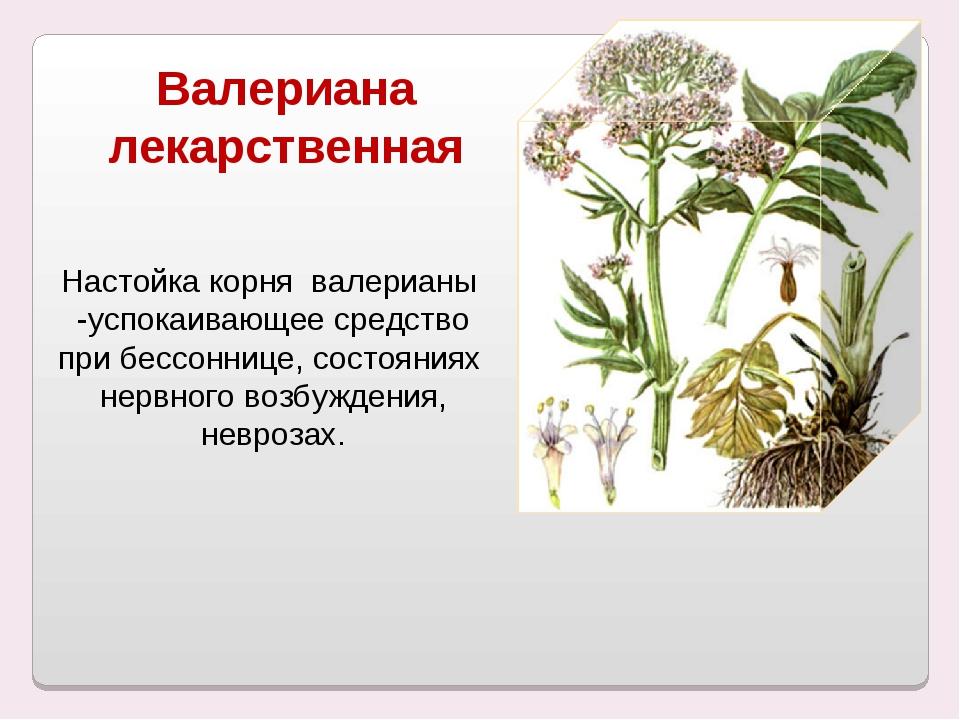 Валериана лекарственная Настойка корня валерианы -успокаивающее средство при...