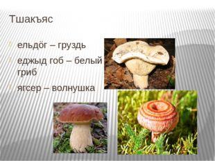 Тшакъяс ельдöг – груздь еджыд гоб – белый гриб ягсер – волнушка