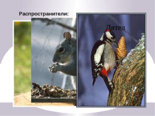 Промысловые животные Бобры Лиса Соболь Олени