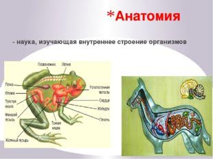 Физиология - исследует деятельность клеток, органов, систем органов и целых о