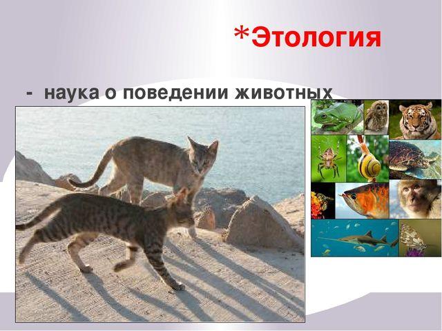 Сходство и различия животных и растений Живые организмы, имеющие общее происх...