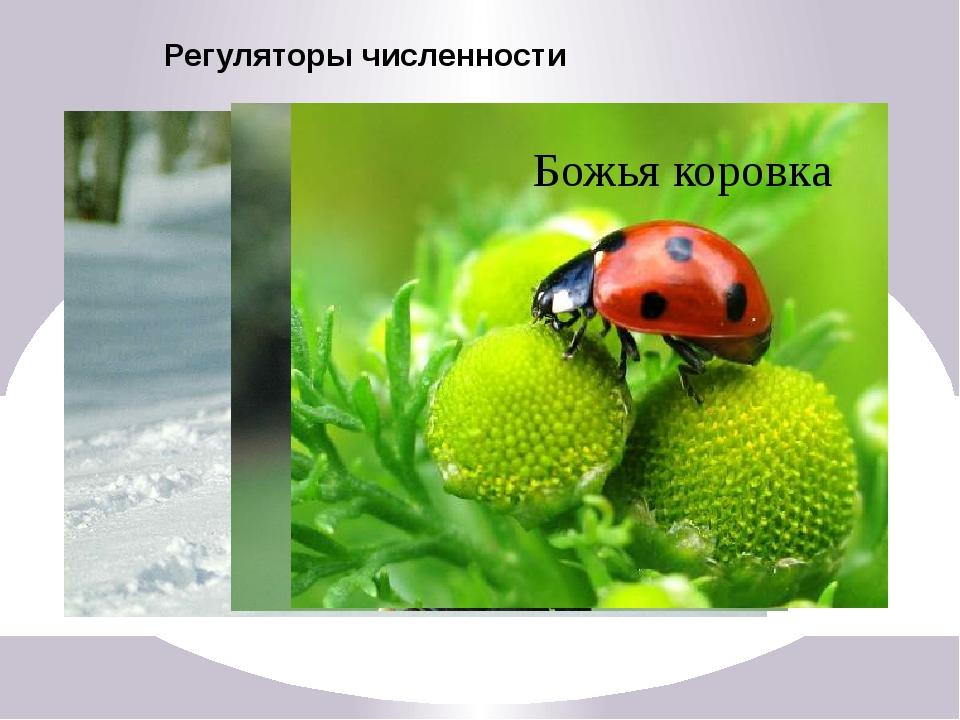 Отрицательное значение Тля Непарный шелкопряд Колорадский жук Саранча Паразит...
