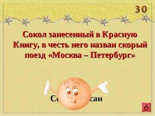 Сокол занесенный в Красную Книгу, в честь него назван скорый поезд «Москва –