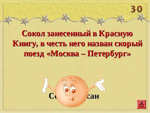 Сокол занесенный в Красную Книгу, в честь него назван скорый поезд «Москва –...