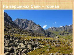 На вершинах Саян – горная тундра.