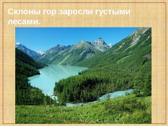 Склоны гор заросли густыми лесами.